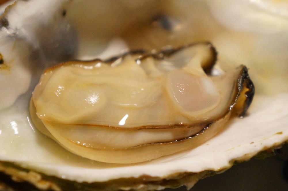 入善町の海洋深層水牡蠣